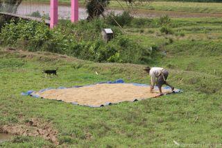 Nangalla, un villaggio poco turistico nella terra dei Toraja