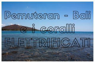 Pemuteran e i coralli elettrificati di Bali