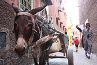 Marocco con bambini: dove dormire da Fez a Marrakech